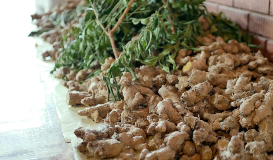 チェンマイ発オーガニックの自然派コスメ|Pure Thai Naturals