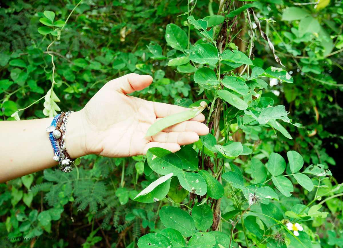 オーガニックファームの懐石ランチをレア体験【世界はほしいモノにあふれてる】